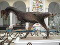 Dilophosaurus wetherilli 4.jpg