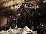 Dinosaurier Berlin naturkunde - 2.jpeg
