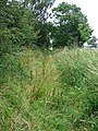 Dismantled railway - geograph.org.uk - 573418.jpg