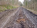 Dismembered Dismantled Tramway, Flimby Great Wood - geograph.org.uk - 137636.jpg