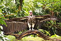 Disney-Animal-Kingdom-Vulture-7799.jpg