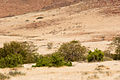 Distant Zebra (3690389596).jpg
