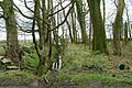 Ditch Through Outon Plantation - geograph.org.uk - 738633.jpg