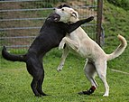 Dogs-friendly-wrestling.jpg