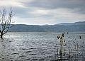 Dojran Lake 102.JPG