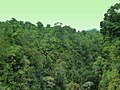 Dominica, Karibik - Dominica, Karibik - Huge Natural Rainforest - panoramio.jpg