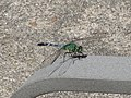Dragonfly on Chair Rest.jpg