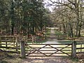 Driftway between Sloden and Alderhill Inclosures, New Forest - geograph.org.uk - 157322.jpg