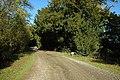 Driveway in Eastnor Park - geograph.org.uk - 1025298.jpg