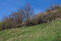 Duben vysenske kopce 10.jpg