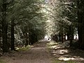 Dunnet Forest, near Thurso - geograph.org.uk - 89507.jpg