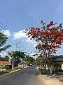 Duong Ton Duc Thang, xa Long Phú, tx. Tân Châu, An Giang, Việt Nam - panoramio.jpg