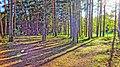 Dzerzhinsky District, Kaluga Oblast, Russia - panoramio (112).jpg