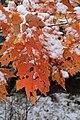 Early season snow in Cades Cove--Erin Sullivan, 11 12 19 (49070633246).jpg