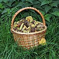 Edible fungi in basket 2020 G4.jpg