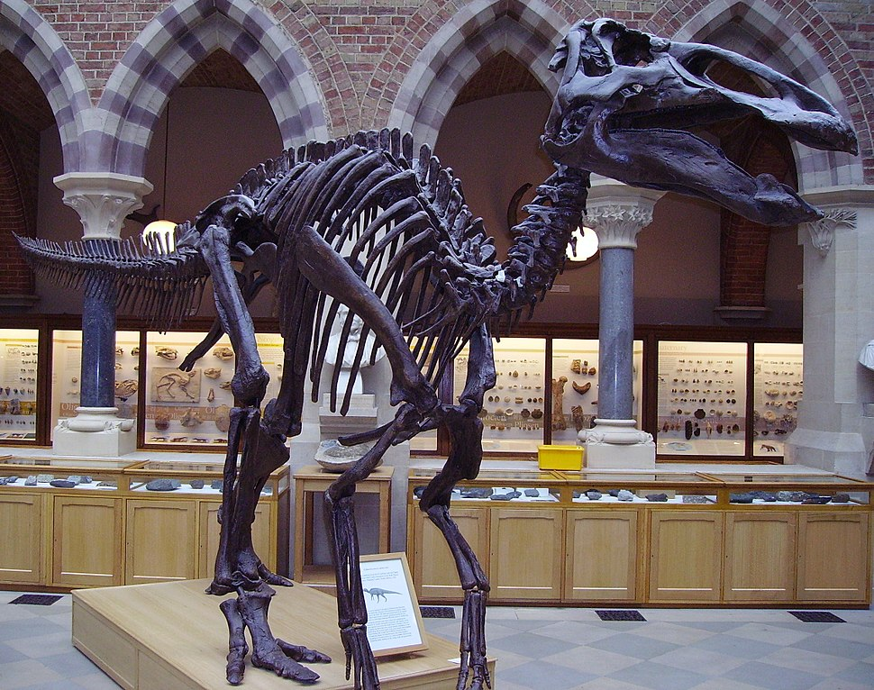 Edmontosaurusskel