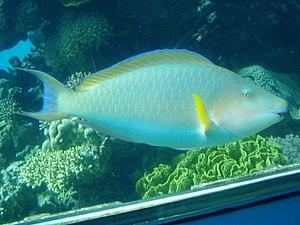 Coral World Underwater Observatory - Image: Eilat Underwater Observatory