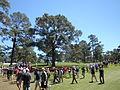 Eisenhower Tree 2011.jpg