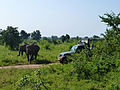 Eléphants-Uda Walawe National Park (4).jpg