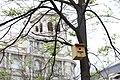 El Ayuntamiento instala 126 cajas nido en los árboles del Paseo de la Castellana 04.jpg