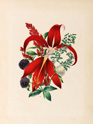 Elizabeth Wirt - Chromolithograph of assorted flowers, after a watercolor attributed to Miss Ann Smith, in Elizabeth Wirt's Flora's Dictionary, edition of 1855.
