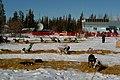 End of the race. Ft. Yukon (5579166037).jpg