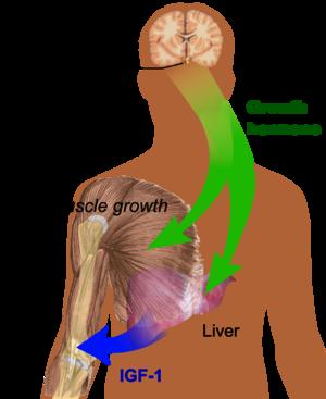 Human growth hormone - RationalWiki