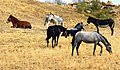 Equinos en Álora.jpg