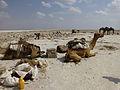 Ethiopie-Exploitation du sel au lac Karoum (23).jpg