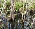 Everglades R04.jpg