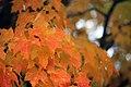 Fall color (15274807267).jpg