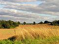 Farmland at Park House - geograph.org.uk - 59466.jpg