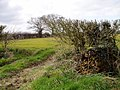 Farmland in March at Winterbottom - geograph.org.uk - 368234.jpg