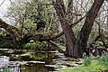 Feering Essex - pond at Skye Green hamlet 1.jpg