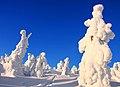 Finland 2012-01-27 (6829144522).jpg