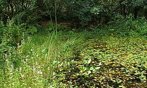 Cornwall Wildlife Trust - One of the ponds at Five Acres