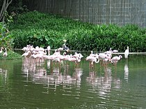 Flamingo Lake, Jurong Bird Park, Oct 05.JPG