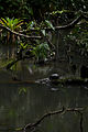 Flickr - ggallice - Jungle creek.jpg