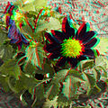 Flickr - jimf0390 - JimF 06-05-12 0008a flowers at Latham.jpg