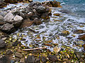 Flickr - ronsaunders47 - BEACH TEXTURES.jpg