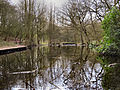 Flickr - ronsaunders47 - RISLEY REFLECTIONS. POND LIFE 2..jpg