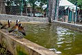 Flock of Birds8.jpg