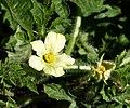Flora (32222639884).jpg