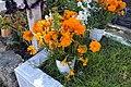 Flores de Día de Muertos.JPG