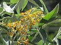 Flores en el Jardín Botánico de Viña del Mar 21.JPG