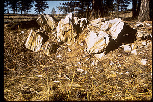 Florissant Fossil Beds National Monument FLFO1236.jpg