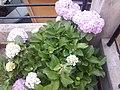 Flower20180527 184614.jpg