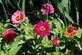 Flower 105 (9443180787).jpg