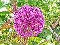 Flower Rex 14.jpg