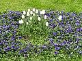 Flowers in Sankt Annæ Plads - Copenhagen - DSC07785.JPG